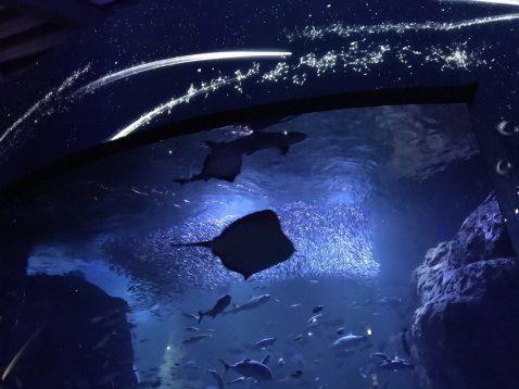 新江ノ島水族館「ナイトワンダーアクアリウム 2017 ~満天の星降る水族館~」で感動を。。✨